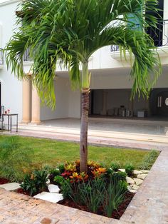 Beginner's Guide To Tropical Landscaping Design Plans Palm Trees Landscaping, Small Front Yard Landscaping, Tropical Landscaping, Landscaping With Rocks, Tropical Garden, Backyard Landscaping, Landscaping Design, Front Yard Garden Design, Landscape Design Plans