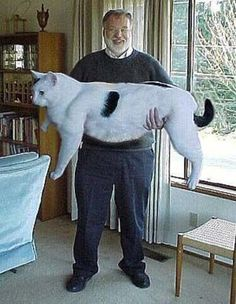 OMG! Look at the size of this cat !!