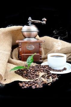 Vintage coffee grinder and fresh coffee with coffee plant in granules..