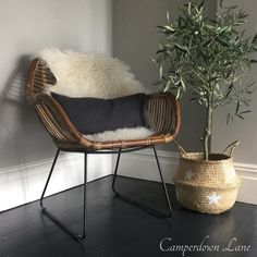 "Camperdown Lane (@camperdownlane) on Instagram: ""We're a little bit in love with our new rattan occasional chairs. Perfect for adding interest to a…"""