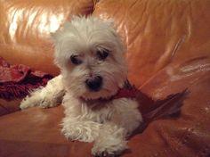 Micky 13,5 jaar