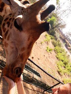 Visit Haller Park in Mombasa, Kenya