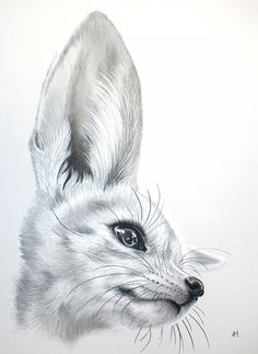 Картинки по запросу рисунок карандашом фенек