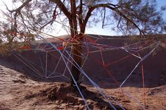 Weaving around a tamarisk tree | Visual Art Research
