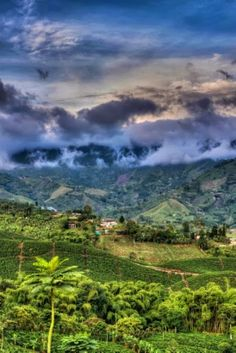 The Coffee Region in Colombia, South America Coffee Origin, Coffee Photos, South America, Latin America, Valencia, Natural Beauty, Exotic, Germany, Around The Worlds