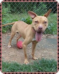 SNITCH is an adoptable Pit Bull Terrier Dog in Marietta, GA. This cute girl is Snitch and she is happy and playful. She knows sit and stay and is very sweet. Snitch was an owner turn in on Aug. 6 th a...