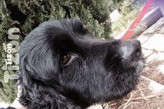 FORSAKEN DOGS - Community - Google+