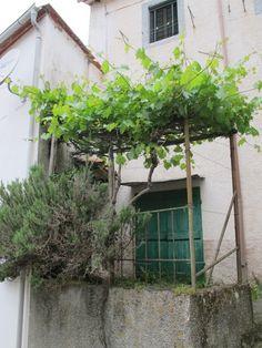 /\ /\ . Bagni di Lucca ~ rock that grape arbor and rosemary plant.
