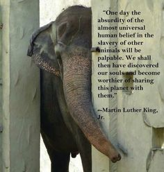 """""""One day the absurdity of the almost universal human belief in the slavery of other animals will be palpable.  We shall then have discovered our souls and become worthier of sharing this planet with them.""""  ~Martin Luther King, Jr."""
