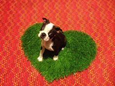 Dog Mat,  Pet Mat For Lap Dogs, MINI Pet Bed, Pee Pad, Pet Gift, Perfect Pet Valentine, Dog Valentine, on Etsy, $12.00