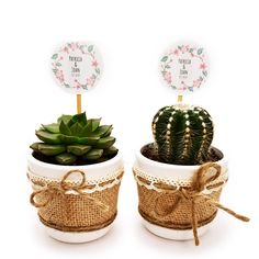 Detalle de boda con cactus o suculenta natural montado en maceta ceramica con cubremacetas de yute y decorada con cinta. Elegante detalle de boda, comunión o fiesta para regalar a tus invitados y para conservar un hermoso recuerdo de este gran día. Cactus Y Suculentas, Planter Pots, Place Cards, Place Card Holders, Natural, Wedding, Guest Gifts, Wedding Day Gifts, Wedding Favors