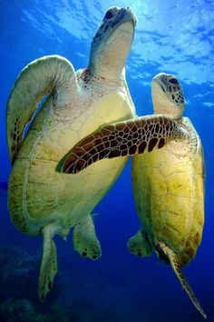 Turtle Love! #coastalliving #happymothersday