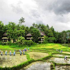 Chiang Mai Thailand, lush in green. #coloroftheyear