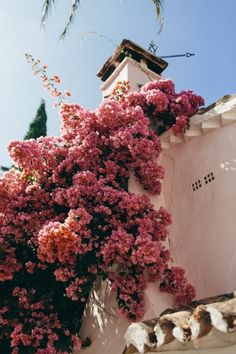 Pretty pink bougainvillea vine growing up the side of a house. Bougainvillea lan… – Best Home Plants Nature Aesthetic, Flower Aesthetic, Aesthetic Photo, Pink Aesthetic, Aesthetic Pictures, Photo Wall Collage, Picture Wall, Aesthetic Iphone Wallpaper, Aesthetic Wallpapers