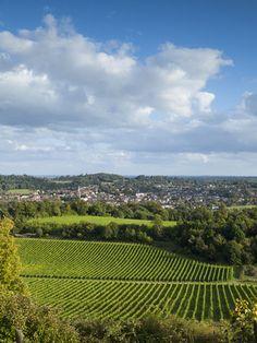 View of Dorking across Denbies Vineyard, Surrey Hills, Surrey