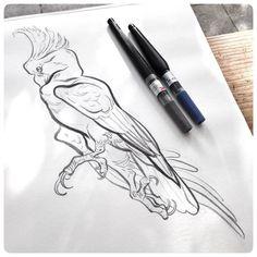 Stretching bird sketching at Verve Coffee Shop in Santa Cruz. #JAWCooper…