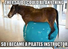 horse memes | Horse Memes. Best Collection of Funny Horse Pictures