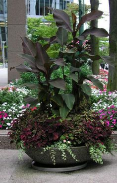 In this container garden the bronze red foliage of the cannas are tall and bold, the coleus add texture in the leaf design for something small to fill the base, accented with light colored ivy to give the container a lush full look.