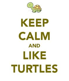 keep calm and like turtles
