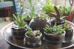https://faroutflora.wordpress.com/2010/01/10/succulents-in-glass/