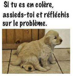 Als je boos bent ga Animals And Pets, Funny Animals, Cute Animals, Jokes Quotes, Book Quotes, Some Jokes, Animal Memes, Teen Wolf, Funny Posts