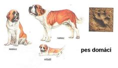 Animals And Pets, Safari, School, Montessori, Cards, Cousins, Pets, Map