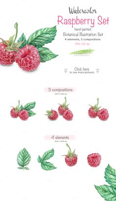 Raspberry SET- detailed watercolor by Acquarella on Watercolor Fruit, Fruit Painting, Watercolor Leaves, Easy Watercolor, Botanical Illustration, Botanical Prints, Watercolor Illustration, Tattoo Mama, Fruit Art