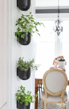 """Modern Kitchen Herb Garden 