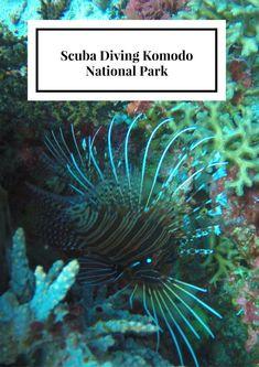 Scuba Diving Komodo National Park - Eat Sleep Breathe Travel Scuba Diving | Komodo National Park | Scuba Diving Indonesia | Suba Diving Komodo National park | Best Scuba Diving | Best Scuba Diving in Indonesia