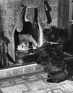 Scottie dog guards the chimney on Christmas Eve.  1947