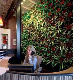 "terra screen living walls | Described as a ""living paint"" the TerraScreen system uses a ..."