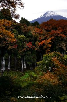 Red leaves season at Mount Fuji. Read budget travel tips for Japan on the blog! Travel Guides, Travel Tips, Volunteer Abroad, Red Leaves, Visit Japan, Mount Fuji, Amazing Destinations, Budget Travel, Continents