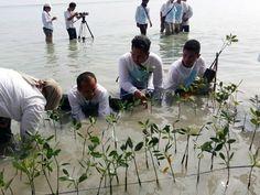 DKI Targetkan Produksi 10.000 Bibit Mangrove