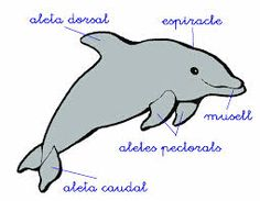 Resultat d'imatges de PARTS D'UN GOS Fine Motor, Dolphins, Fictional Characters, Bodies, Polo, School, Google, Ideas, World