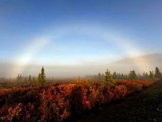 National Parks, National Geo Photo Contest  Photograph by Edward Krumanaker, My Shot  This fogbow appeared during a brisk morning in Denali National Park, Alaska. The entire valley was fog filled and somewhat surreal with the sun's early morning reflections.