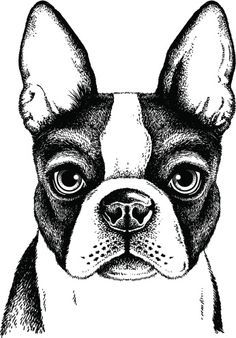 Image result for how to draw a boston terrier