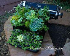 Succulent Typewriter by Donna Davis Taylor