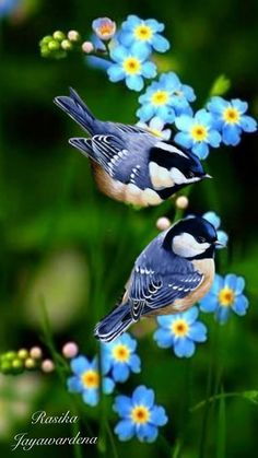Beautiful Creatures, Animals Beautiful, Cute Animals, Cute Birds, Pretty Birds, Exotic Birds, Colorful Birds, Bird Pictures, Nature Pictures