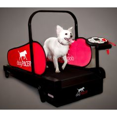 dogPACER MiniPacer Folding Fitness Treadmill For Dogs Up to 55 lbs