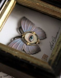 Cabinet of Curiosities Specimen no. 14  The Pastel Moth Eye Fly by mabgraves