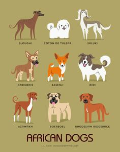 AFRICAN DOGS art print dog breeds from Africa by doggiedrawings