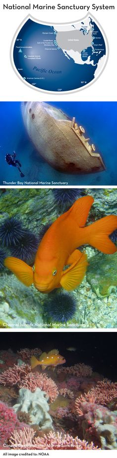 From sea to shinning sea, the US is protecting our beautiful waterways with 14 National Marine Sanctuaries covering over 170,000 miles of ocean & Great Lakes. Now these sanctuaries need your help: http://sailorsforthesea.org/blog/conservation/national-marine-sanctuaries