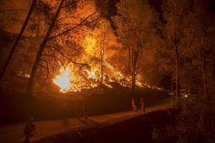 The Butte fire has destroyed 86 homes and 51 outbuildings in rural Amador and Calaveras counties, where it covers an estimated 65,000 acres (26,305 hectares).