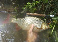 35 cm rudd from Svratka river
