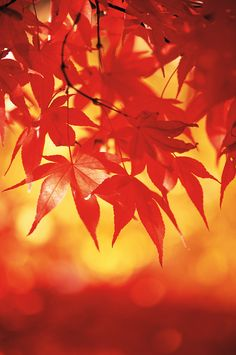 Fall color: how to photograph autumn leaves and other seasonal images