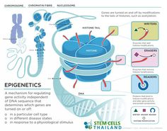 epigenetics-gene-expressions