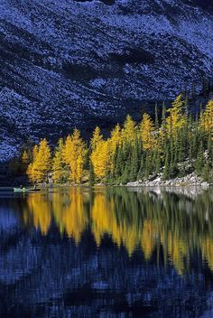 Alpine Larch trees - Lake Agnes, Banff National Park, Canada.