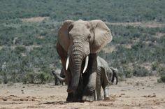 Zuid Afrika, Addo Elephant Park