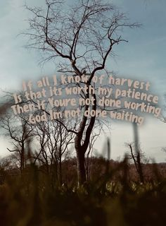 Seasons Hillsong Worship harvest tree Wallpaper Christian