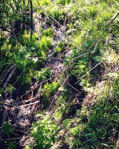 """просто фото """"#загородом #пейзаж #природа #весна #вода #водоем #ручей#под#деревьями #деревья #красиво #зелено #хорошаяпогода #Inthecountryside #ausserhalbderstadt #nature #dienatur #landschaft #landscape #russia #rusland #spring #frühjahr #wasser #water #creek #strom #green #trees #bäume """" от marinika_sidorenko May 28 2016 at 10:11PM"""